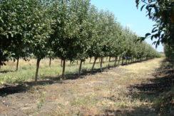 Овощна градина с.Манастир обл.Хасково